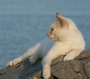 Cuidados especiales del gato en verano