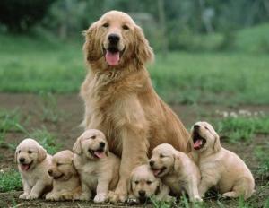 Gestación en la perra y en la gata