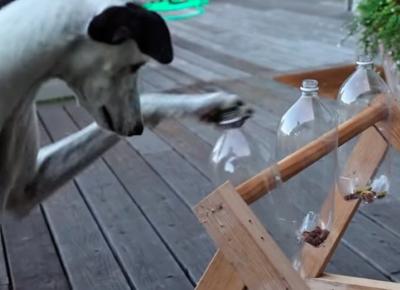 Jugar y educar a los cachorros