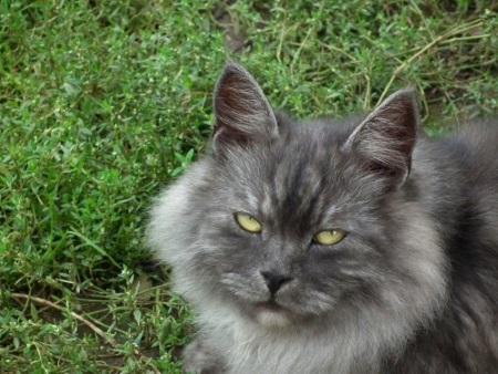 El gato envejece