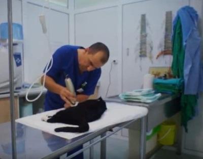 Los cuidados necesarios tras la esterilización