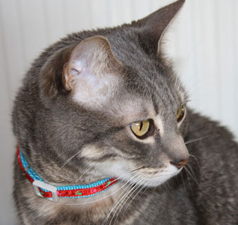 Otitis externa del gato