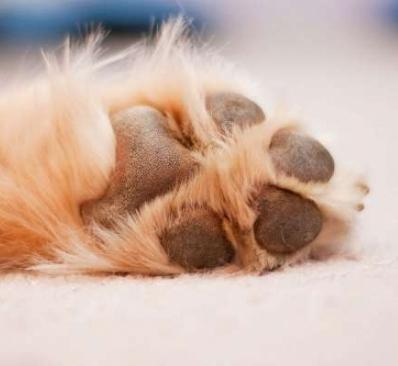 Cuidados básicos del perro: pies todoterreno