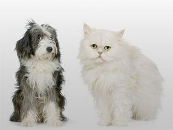 El celo de la perra y la gata