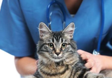 ¿Necesita tu gato ir al veterinario?