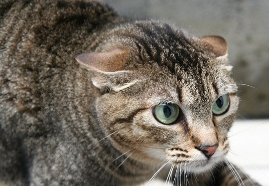Cómo entenderte con tu gato