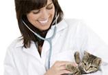Veterinaria con gato